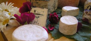 Käse für Käseliebhaber - Kurs